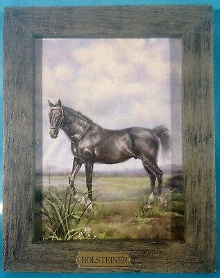 """Standing Holsteiner Horse Picture Print 7"""" x 9"""" Barn Wood Style Frame Nameplate"""