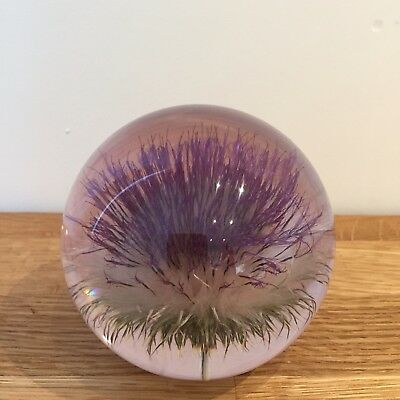THISTLE PAPERWEIGHT Made With Real Thistle - Collectable Country Gift Art