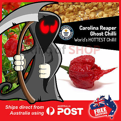 Cheapest  200 SEEDS Carolina Reaper Ghost Chili Seeds   World's HOTTEST chilli