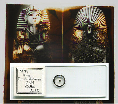 King Tut Microphotograph Microscope Slide by Anthony J. DiDonato