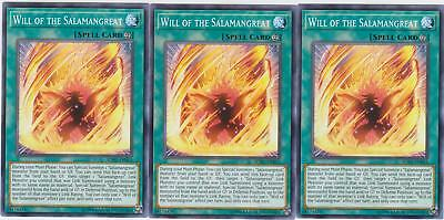 Yugioh! 3x Will of the Salamangreat - SOFU-EN053 - Common - Unlimited Edition Ne