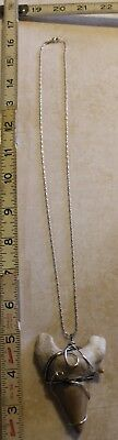 """Necklace Megalodon / Tiger Shark Fossil Tooth 2 3/4 """" x 2 1/4"""" Sterling Wrapped"""