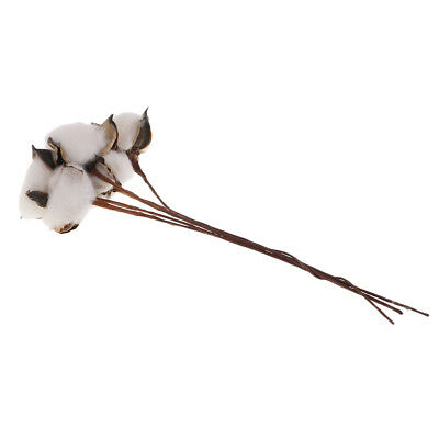 Cotton Stems 12Inch 5 Bolls Rustic Floral for Home Decor Wedding Centerpiece