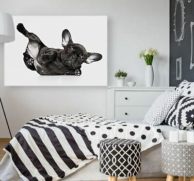 BLACK & WHITE DOG animals high quality Canvas painting  Home decor