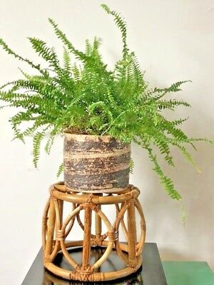 Vintage Mid Century Bamboo plant Pot Plant Stand