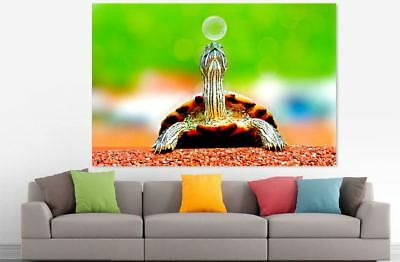 TURTLE BEAUTIFUL NATURE ANIMALS high quality wall Canvas wall art home decor
