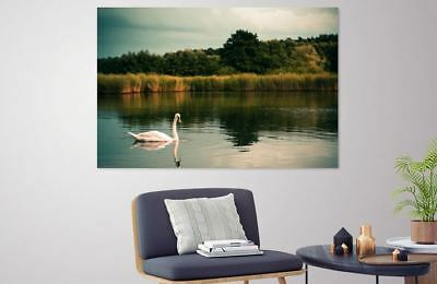 animals-forest-lake-nature- LOVELY  high quality wall Canvas wall art home decor