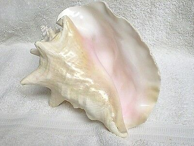 Conch Shell Pink Interior