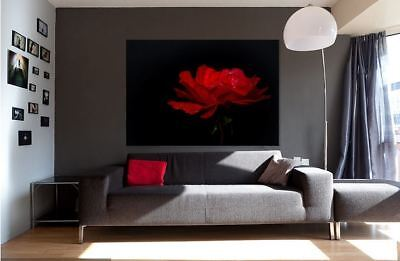 rose-red-blossom-bloom--beautiful quality Canvas Print wall art home decor
