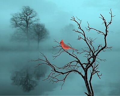 RED CARDINAL WALL Decor Photo Art Surreal Photography Red ...