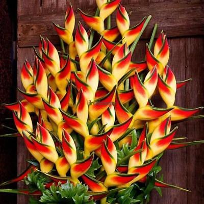 Heliconia Seeds Rare Flower Seeds Home Garden Bonsai Potted Plant Seeds BRCE 01