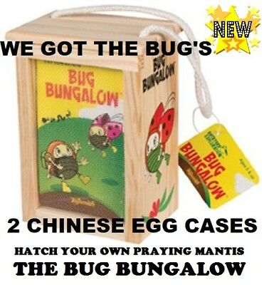2 Live * Fresh Picked * Chinese Praying Mantis Egg Cases  ➕  ONE BUG BUNGALOW