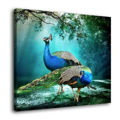 Beauty Peacock HD Canvas Print Painting Home Decor room Wall Art Picture 3749