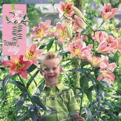 Tower / Skyscraper Lily 'On Stage' WPC Prins Bulbs & Tubers Pack x3