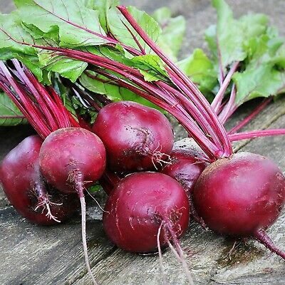 BEETROOT Detroit Dark Red 50+ Seeds AUTUMN WINTER SPRING SUMMER vegetable garden