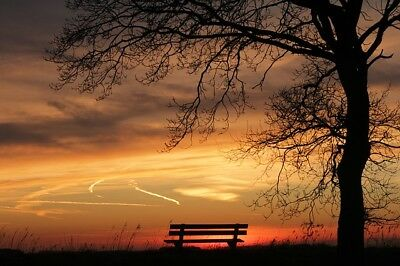 Amazing tree sunset bench Canvas Print Home Decor Wall Art choose your size