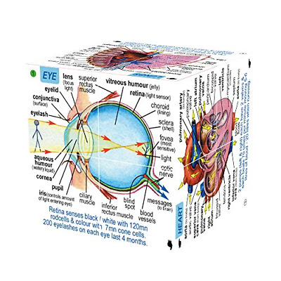 Human Body Systems and Statistics Cube Book Educational