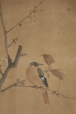 """JAPANESE HANGING SCROLL ART Painting """"Bird on tree"""" Asian antique  #E5654"""