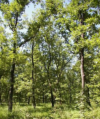 Oak Forest Auction Bulgaria Property Bulgarian Land House Log Cabin Camp Site