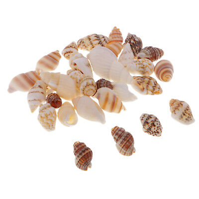 30x Sea Shells Mixed Beach Seashell DIY Accents for Candle Making Decoration