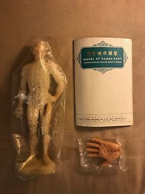 Model of Human Anatomy vintage medical model NEW w/ book and hand acupuncture