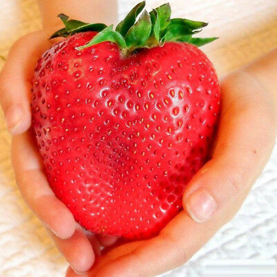 315 PCS Giant Red Strawberry Seeds Heirloom Organic Fruit Non-Gmo Garden Seeds
