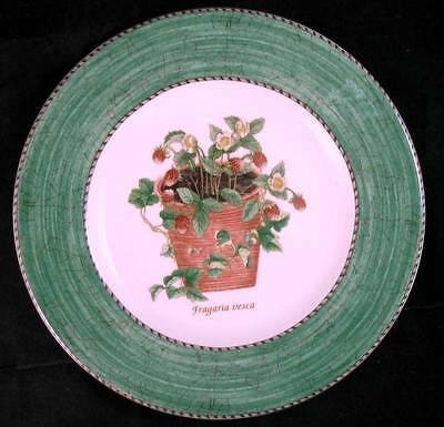 Wedgwood SARAH'S GARDEN Salad Plate GREEN RIM GREAT CONDITION A+