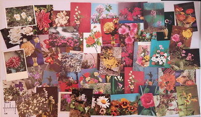 Lot 50 postcards all flowers