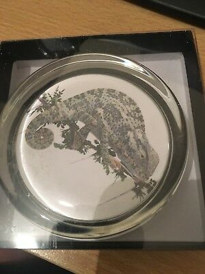 New Chameleon Lizard Glass Paperweight in Gift Box