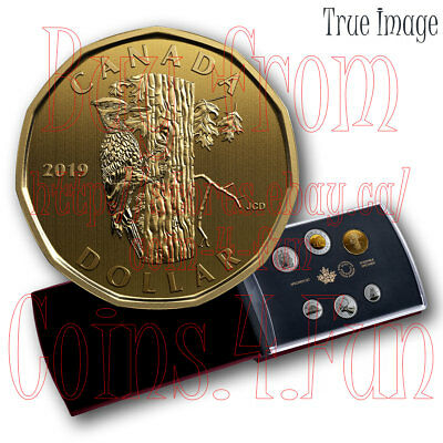 2019 - $1 Pileated Woodpecker Dolar Loonie - 6-coin Specimen Set - Canada