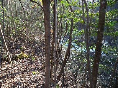 25+ Acres hunting timber land w/ pond in Polkville, Smith County, Mississippi Ms