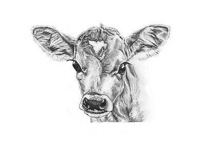 ORIGINAL ARTWORK A4 PRINT Charcoal Drawing Picture of a Calf Cow Animal Art