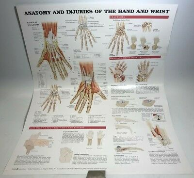 Anatomy and Injuries of the Hand and Wrist Laminated by Anatomical Chart Company