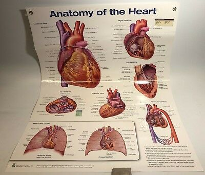 Anatomy of the Heart by Anatomical Chart Company (Poster, 2017) Laminated