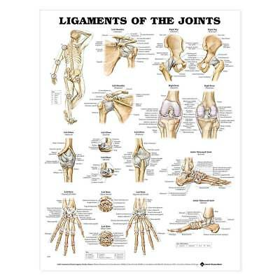 Ligaments Joints Anatomical Paper Chart Poster