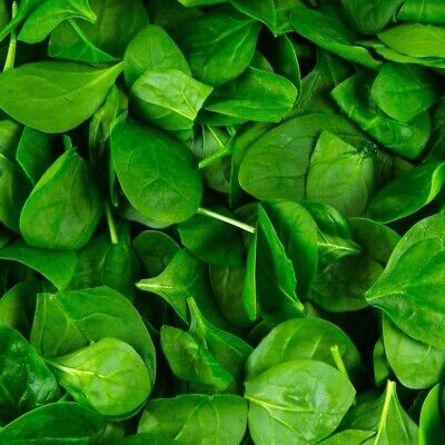 BABY SPINACH 100 Seeds ABUNDANT Baby Salad Leaves AUTUMN WINTER Vegetable Garden