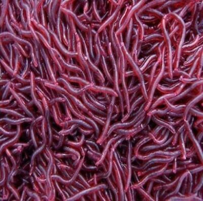 Bloodworm Soft Plastic Lure Fishing Worm Bait Red Blood