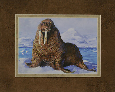 Wally Walrus by Terry Doughty 8x10 double matted art print