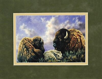 Buffalo by Rosemary Millette 8x10 double matted art print