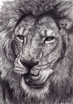 """"""" Lion """" NEW ORIGINAL DRAWINGS PENCIL ON PAPER 5""""x7"""" BY ARTIST NO RESERVE"""