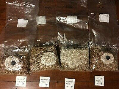 4x1lbs Sterilised Rye Berry Mushroom Substrate Grain Spawn Filter+Injection port