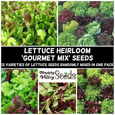 LETTUCE 'Mixed' 400+ Seeds ALL TYPE GOURMET MIX SALAD Heirloom Vegetable Garden
