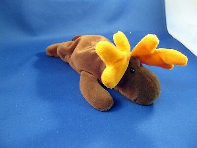 """Mint Condition  Ty Beanie Babies """"chocolate"""" Moose"""