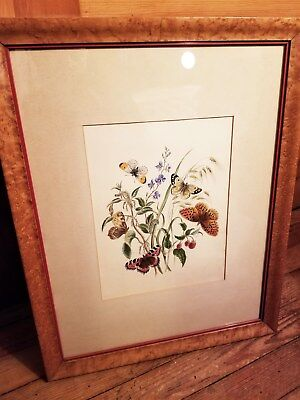 c1845 Antique Watercolor Painting INSECTS BUTTERFLIES Birdseye Maple Frame