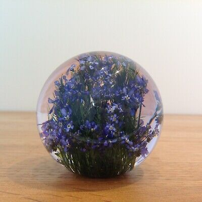 FORGET ME NOT PAPERWEIGHT With Real Forget Me Not - Collectable Country Gift Art