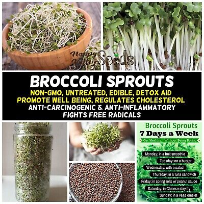 BROCCOLI Sprout Seeds Sprouts Sprouting ~ CANCER PREVENTING SULFORAPHANE NON-GMO