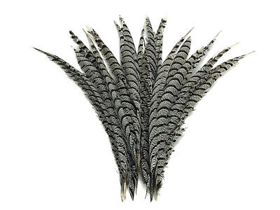 """5 Pieces - 20-25"""" Natural Zebra Black And White Lady Amherst Pheasant Tail Super"""