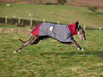 Padded Waterproof Jackets for Greyhounds, Whippets, Lurchers