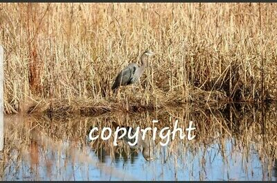 Photo, Wallpaper Digital Picture Photo Image Picture Desktop Background - Heron