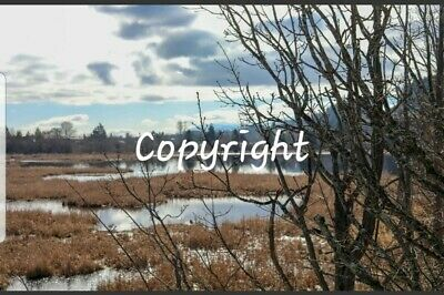 Photo, wallpaper digital picture free worldwide email delivery - Buttertub Marsh